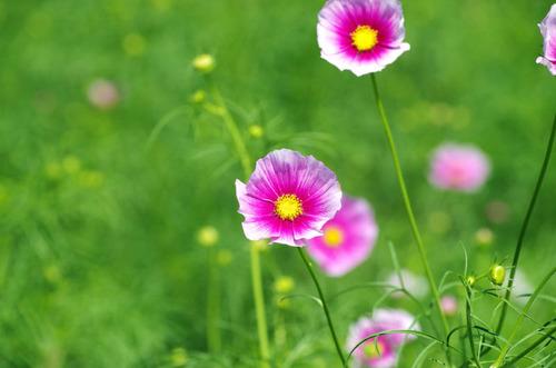 昭和記念公園201409-7