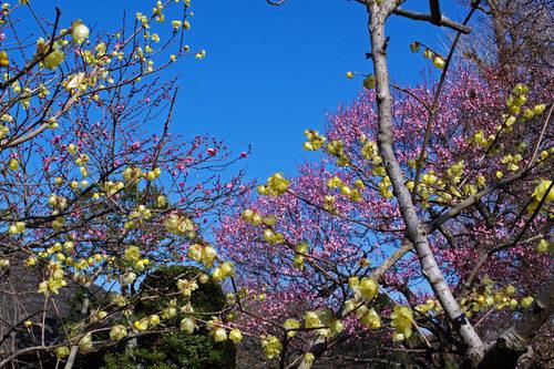 百草園20100130-6