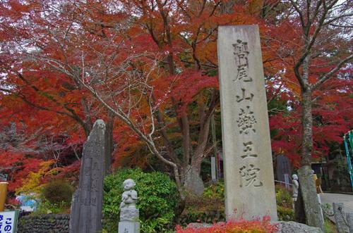 高尾山201111-18