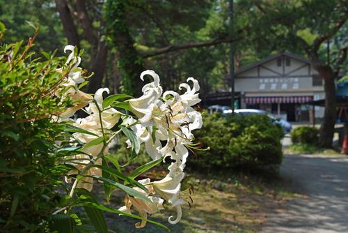 本栖湖キャンプ場201508-4