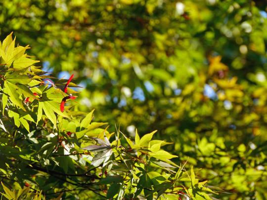 秋の百草園200910-8