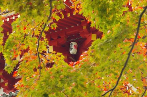 高幡不動尊201211-4