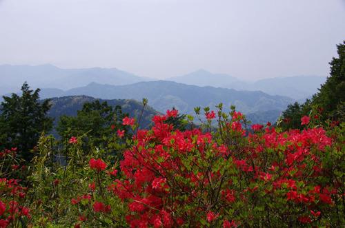 高尾山20110430-5