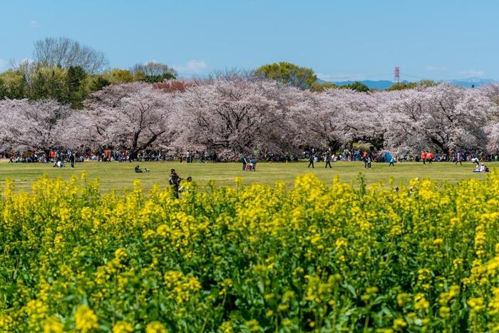 昭和記念公園201904