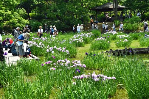 昭和記念公園201605-5