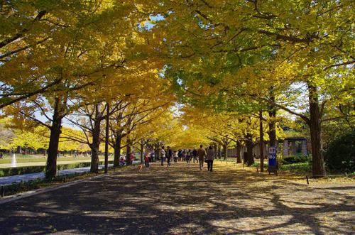 昭和記念公園201111-3