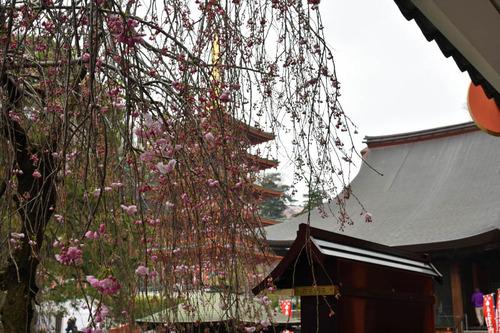 高幡不動尊201604-12