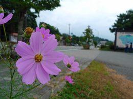 本栖湖200909-14