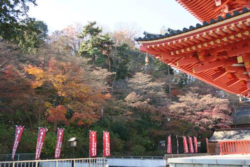 高幡不動201412-9