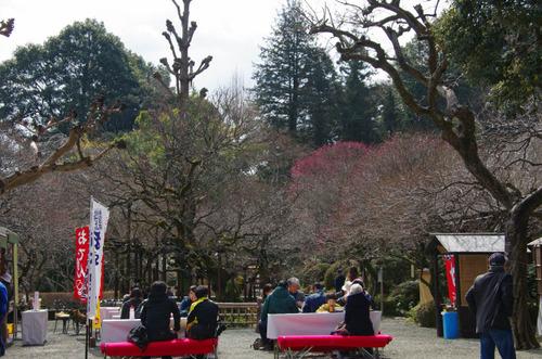京王百草園20120303-13