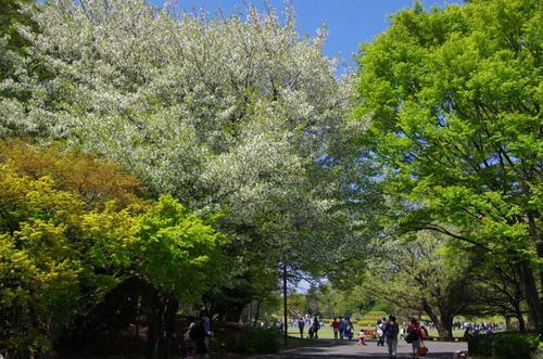 昭和記念公園201104-2