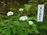 高幡不動0524-2