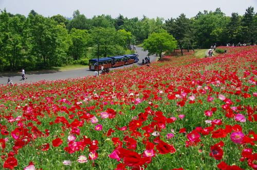 昭和記念公園201105-10