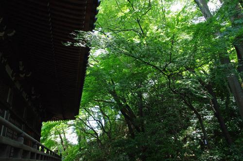 高幡不動尊20100807-7