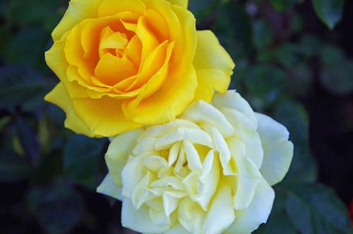 神代植物公園201210-9