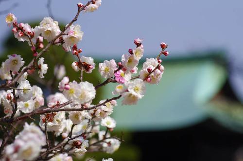 高幡不動201303-12