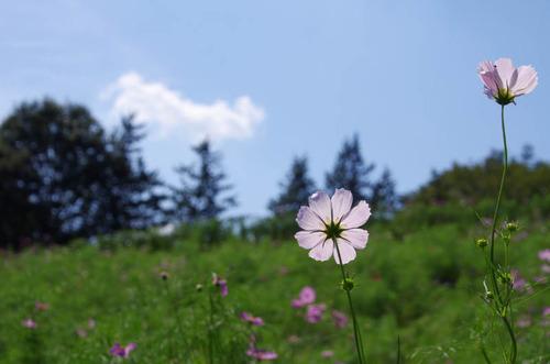 昭和記念公園201309-10