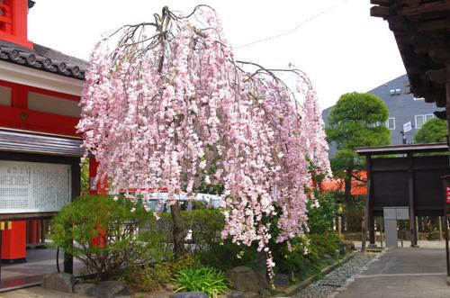 高幡不動201404-8
