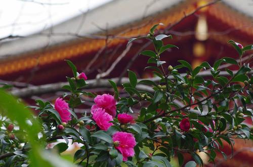 高幡不動201110-12
