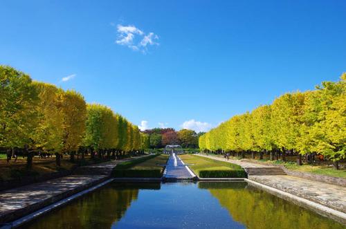 昭和記念公園201411-5
