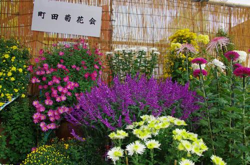 高幡不動201311-1