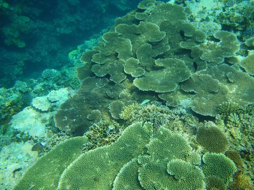 西表島バラス島201008-2