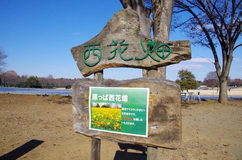 昭和記念公園イルミネーション-12