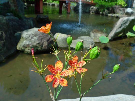 花と実200909-8