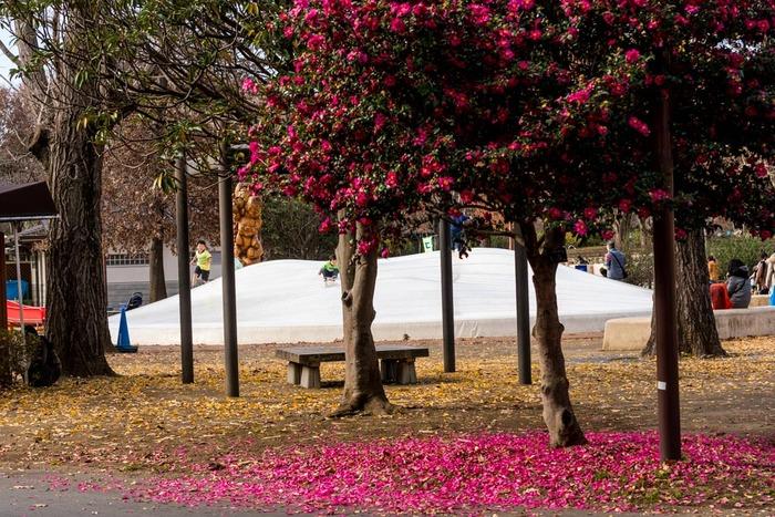 昭和記念公園201812