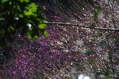 百草園20100130-4