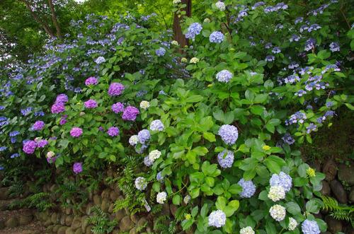 高幡不動201206-13