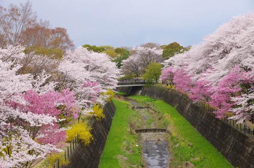 昭和記念公園201404-15