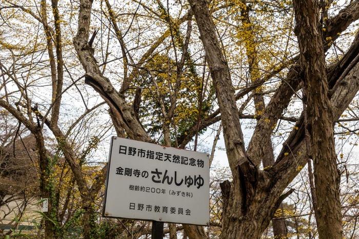 高幡不動尊201903