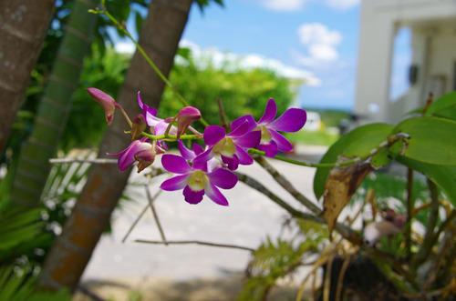沖縄20110801-13