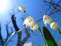 程久保川の春-2