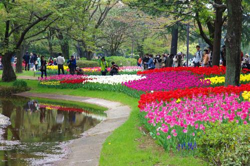 昭和記念公園201404-9