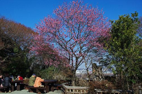 百草園20100130-1