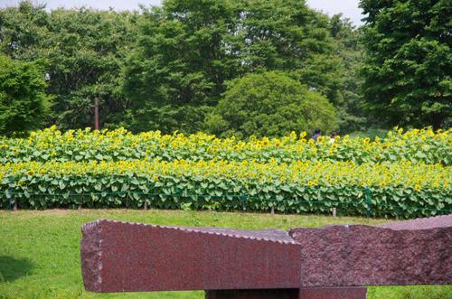 昭和記念公園201208-11