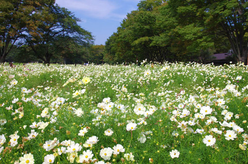 昭和記念公園2014-1