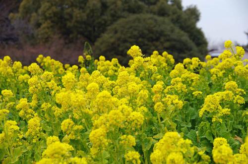 昭和記念公園201201-7