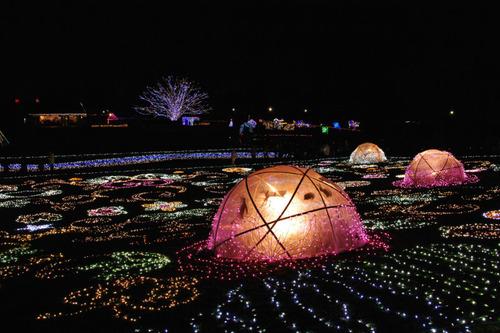 昭和記念公園イルミネーション201012-24