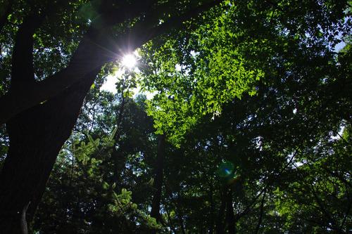 夏の日差し201008