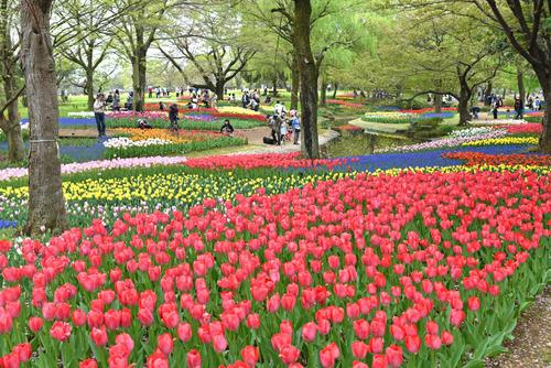 昭和記念公園201504-2