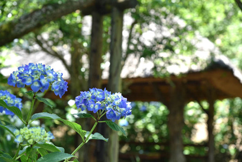 京王百草園201506-1