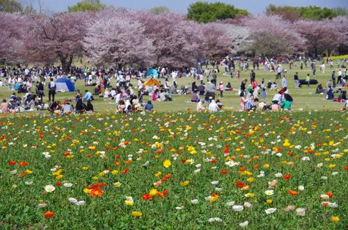 昭和記念公園201104-9