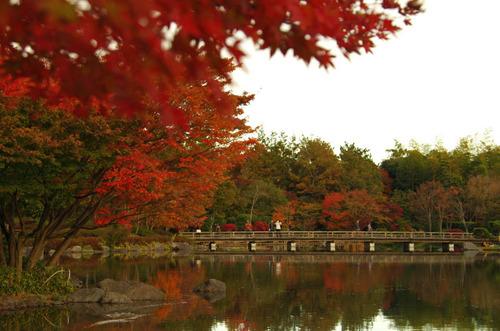 昭和記念公園紅葉201211-6