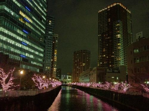 目黒川冬の桜201112-3