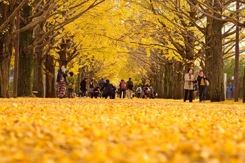 昭和記念公園201511