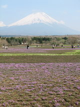 富士芝桜富士山1