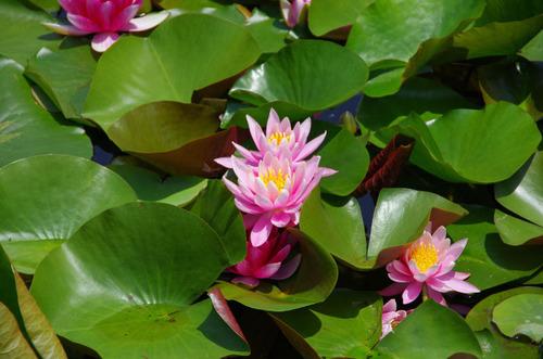 昭和記念公園201105-3
